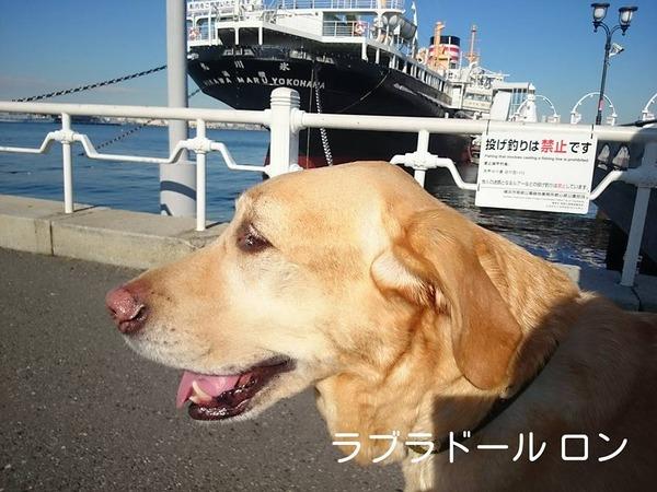 20160202 再診 お散歩 1