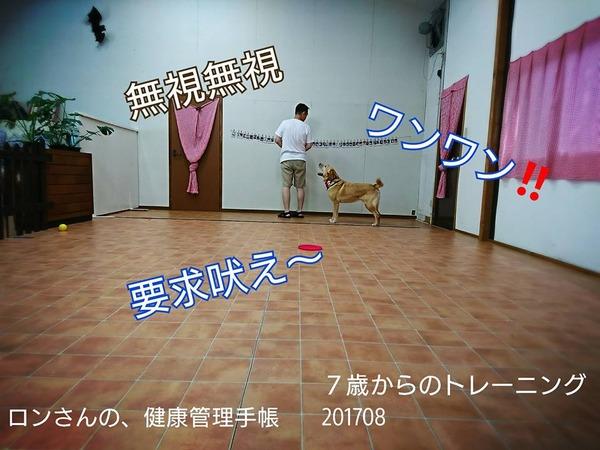 20170809 トレーニング 8回目 5