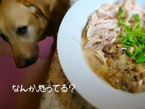 20150828 ボスグルコン #犬ごはん #ラブラドール #納豆 1