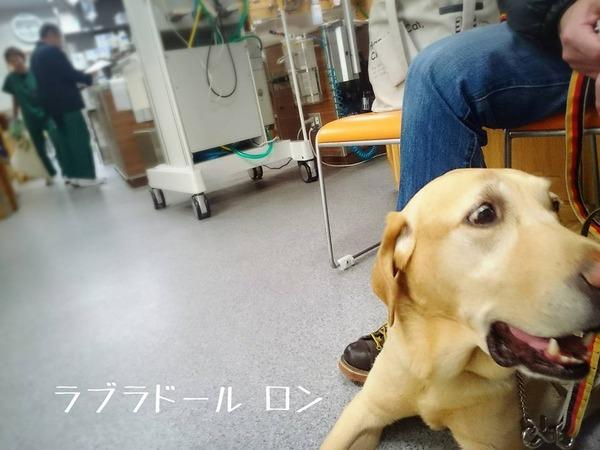 20160126 十字靭帯 みなとよこはま 初診 4
