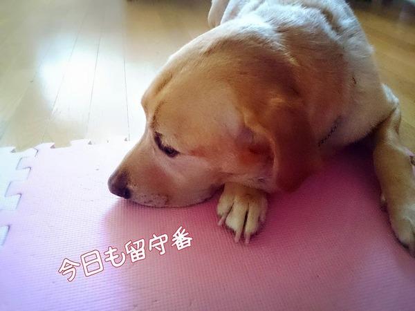 20151014 ロンご飯 根菜おじや 鶏ムネササミ 4留守番