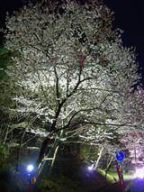 信夫山の夜
