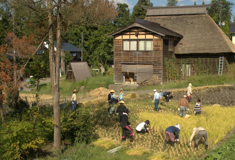 稲刈り体験ツアー