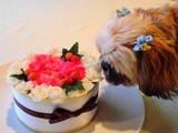 お花とタバサ