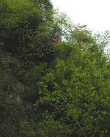 崖の上の花-050510