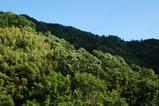 D100で新緑の山を撮影