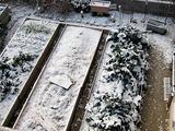 今朝の積雪の様子・・うっすらと積もるだけでした