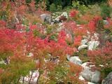 滝山峡記念庭園