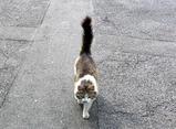 某ダムにいた猫ちゃん