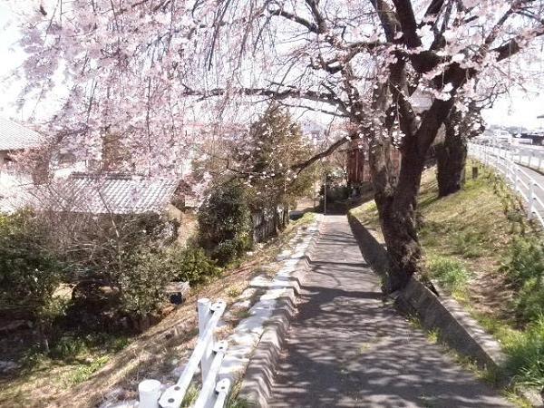 もうすぐ桜のシーズン!ゲームで見られる桜の風景を大特集!