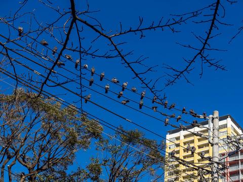 自転車屋 横浜駅 自転車屋さん : 谷中から根津、千駄木は観光お ...