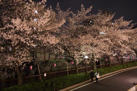 中目黒_夜桜_2