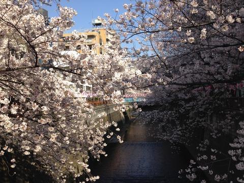 中目黒桜2015_02