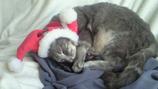 トム吉 クリスマスバージョン