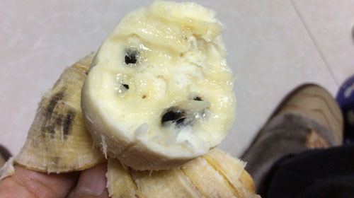 バナナの種