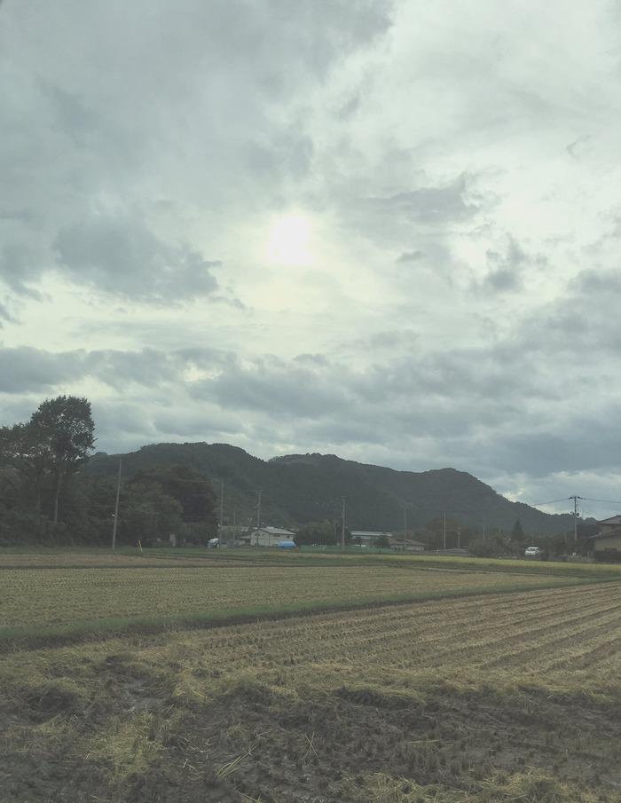 keyaki-ks001999