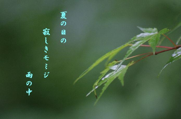 keyaki-ks000775