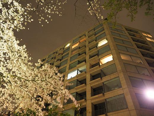九段坂の夜桜と千鳥ヶ淵5