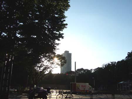 夏の新宿中央公園1