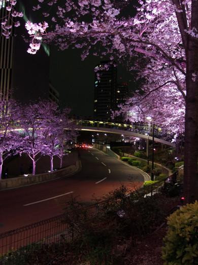 東京ミッドタウンの坂と桜1