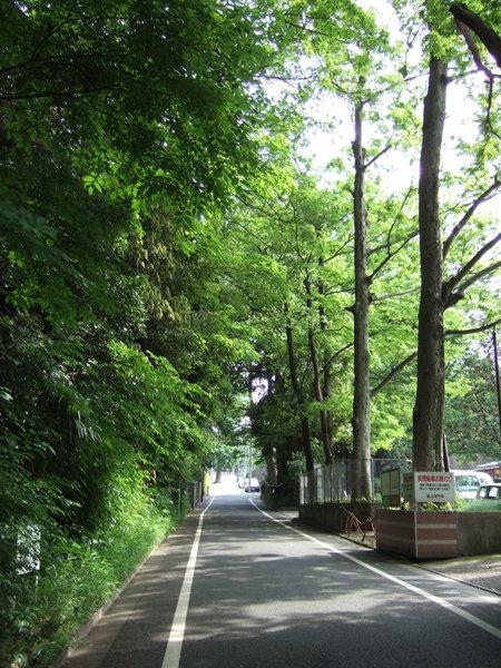 五重塔がある本門寺境内の坂2
