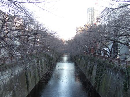 真冬の目黒川