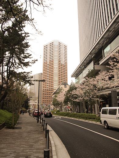 外濠公園の桜を見ながら坂道も2