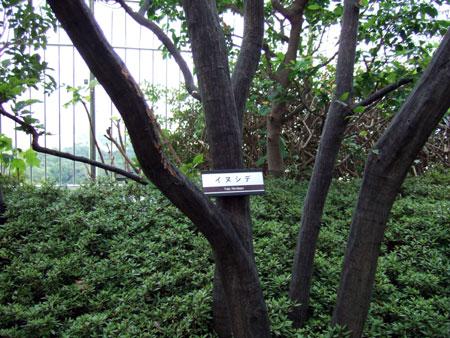 タイムズスクエアーの樹木たち2