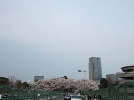 春の青山霊園2