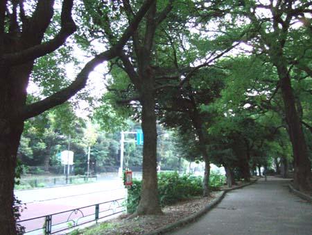 銀杏坂 (NO.111)6