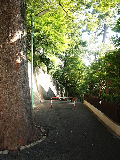 国分寺崖線の崖具合を楽しめる階段3