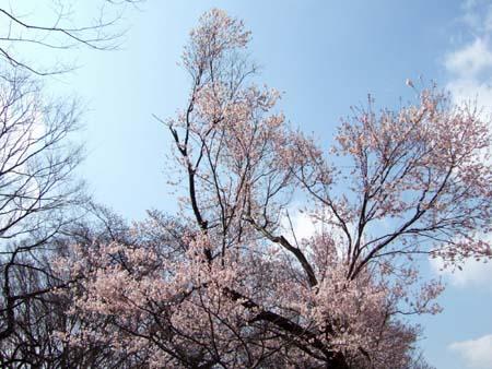 春まじかの代々木公園2