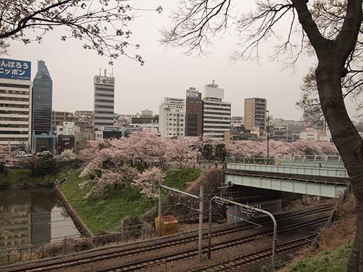外濠公園の桜を見ながら坂道も8