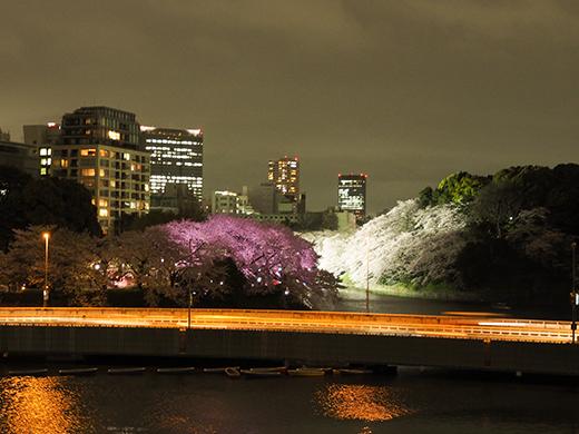 九段坂の夜桜と千鳥ヶ淵6