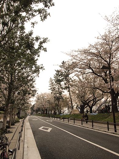 外濠公園の桜を見ながら坂道も1