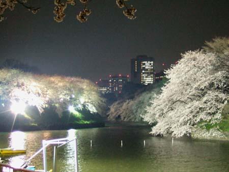 九段下の夜桜3
