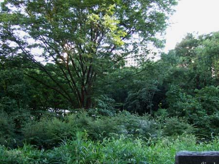 夏の新宿中央公園3