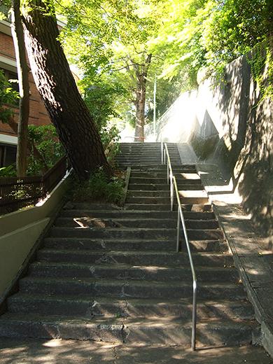 国分寺崖線の崖具合を楽しめる階段5