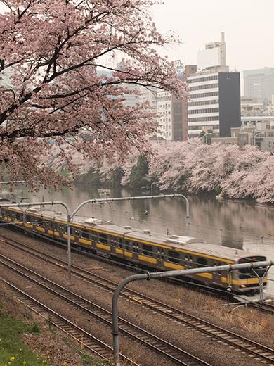 外濠公園の桜を見ながら坂道も5