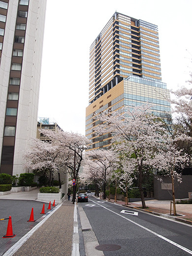 桜坂の桜見物8