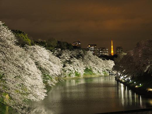 九段坂の夜桜と千鳥ヶ淵4