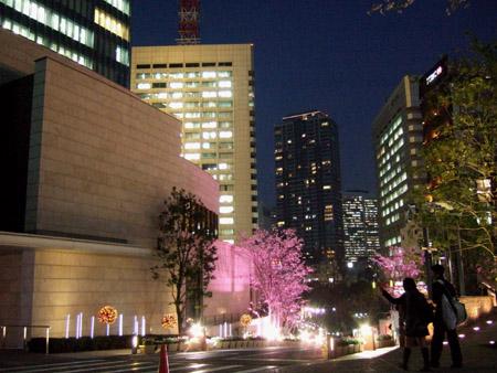 さくら坂で桜3