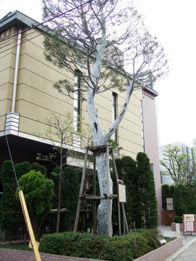 渋谷國學院と御用邸の横の坂2