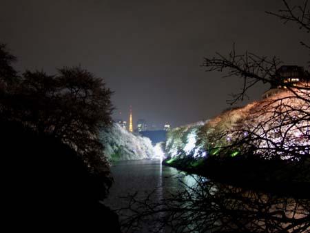 九段下の夜桜