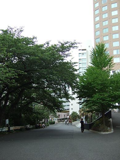 いちょう坂(NO.244)6