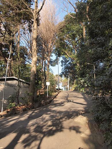 代々木八幡宮の女坂(NO.261)4