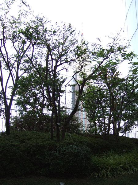 タイムズスクエアーの樹木たち1