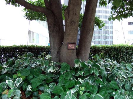 タイムズスクエアーの樹木たち7