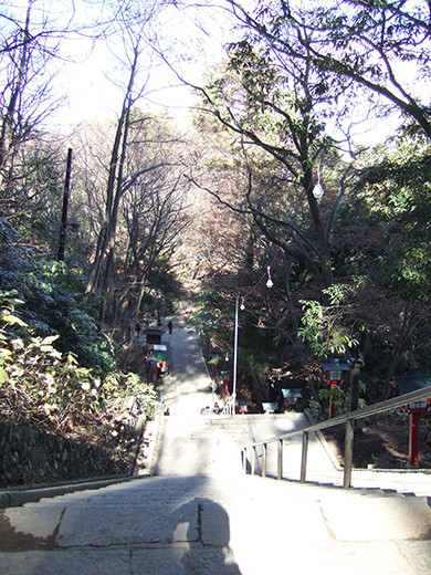 高尾山の男坂(NO.248)6