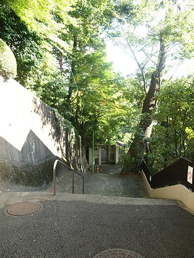 国分寺崖線の崖具合を楽しめる階段4